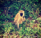 Photo Diary: Animal Spotting & Safari Fun