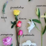 Explore: The Secret Language of Flowers
