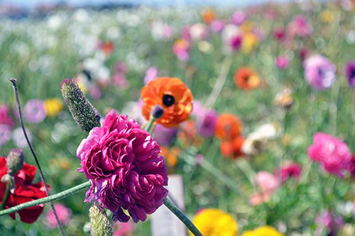 Odds & Ends: Spring Flower Guide