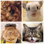 Tuesday Ten: Must-Follow Instagram Animals