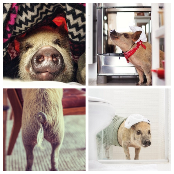 The 10 Cutest Animals on Instagram