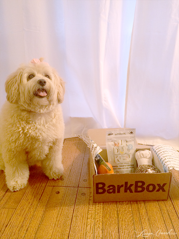 Puppy Love: The Ultimate Gift For Your Dog   LaurenConrad.com