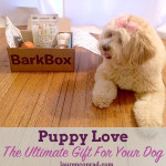 Puppy Love: The Ultimate Gift For Your Dog