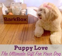 barkboxheader