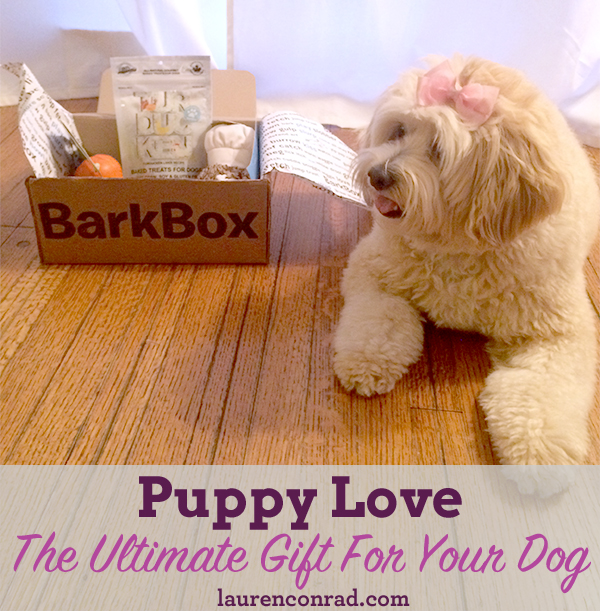 Puppy Love: The Ultimate Gift For Your Dog | LaurenConrad.com