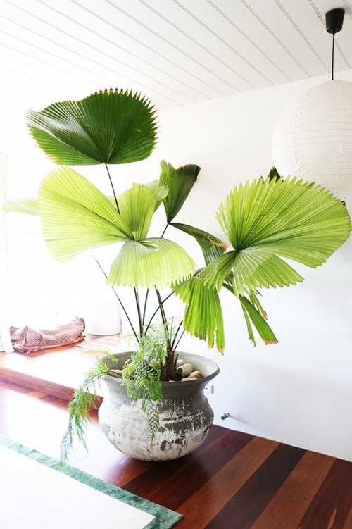 Green Thumb: Our Favorite Indoor Plants to Grow In Your Home ... on house plants in containers, tropical plants in vases, house plants in kitchen, green plants in vases, aquatic plants in vases, growing plants in vases, fake plants in vases, water plants in vases,