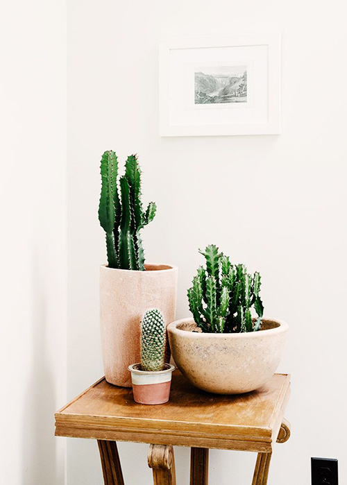 green thumb our favorite indoor plants to grow in your home lauren conrad. Black Bedroom Furniture Sets. Home Design Ideas