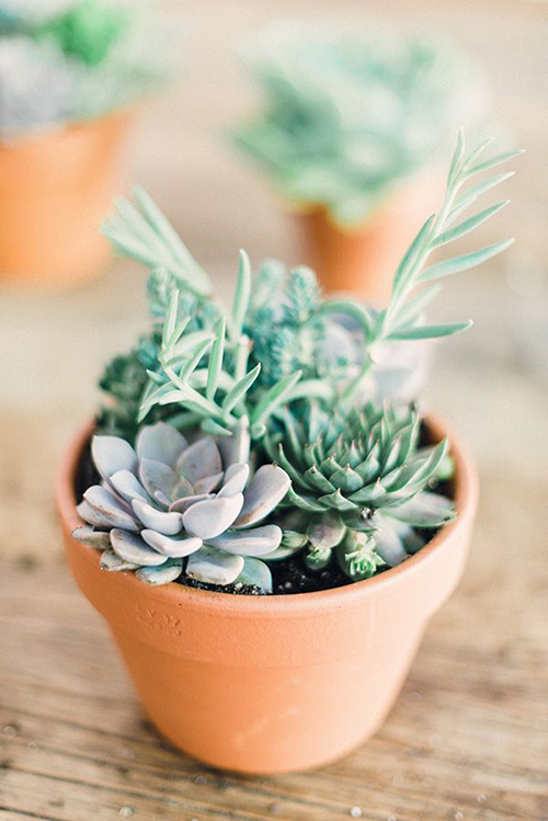 Green Thumb Our Favorite Indoor Plants To Grow In Your