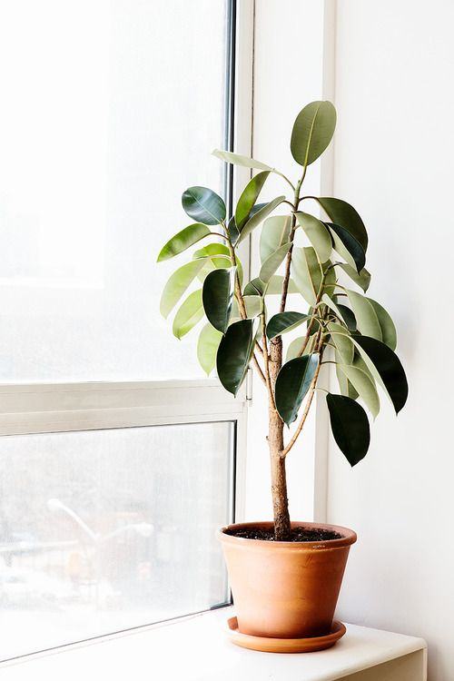 Green thumb our favorite indoor plants to grow in your for Best easy indoor plants