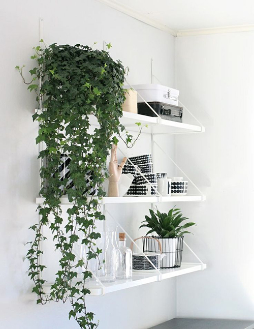 Green thumb our favorite indoor plants to grow in your - Decorate home with plants ...