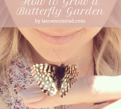 Green Thumb: How to Plant a Butterfly or Honeybee Garden