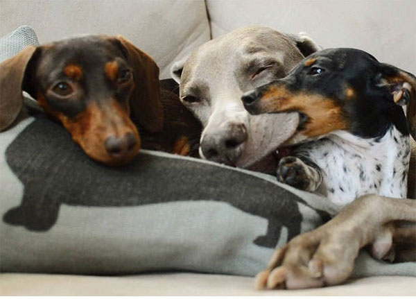 We can't get enough of these furry friends.
