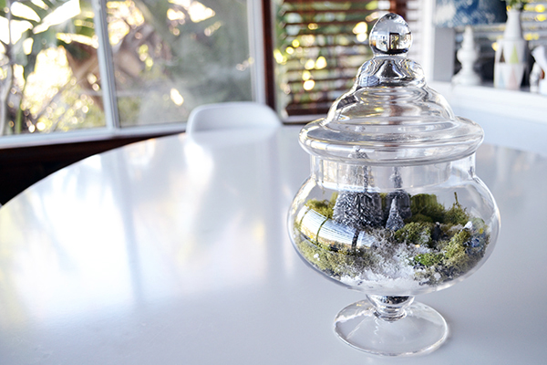 Homemade winter terrariums.