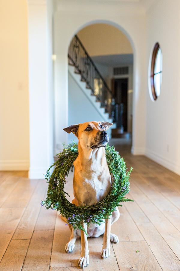 Chloe showing off our DIY holiday wreath on LaurenConrad.com