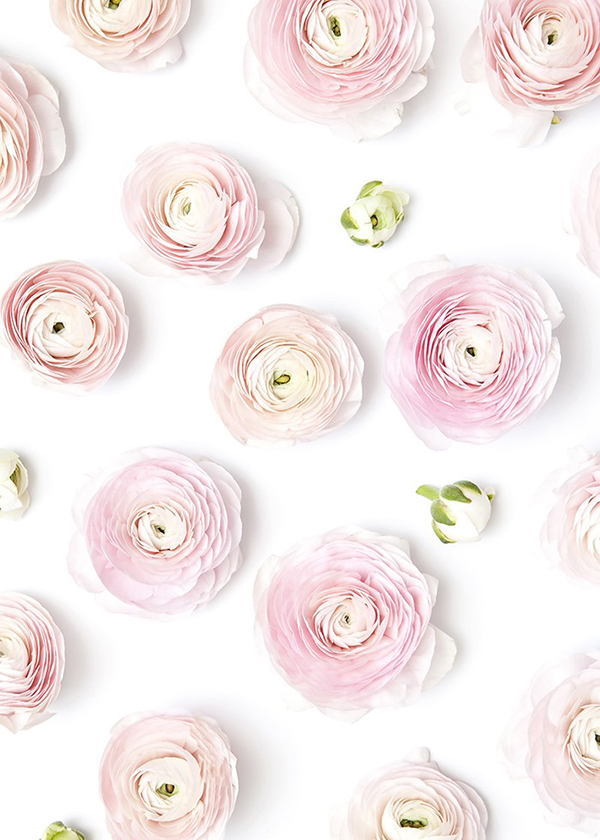 How stunning are these ranunculus?