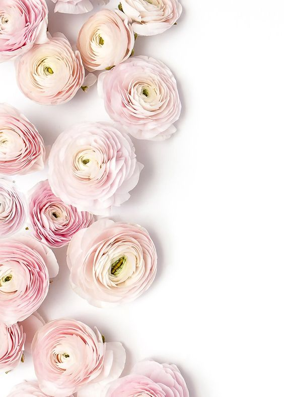 Favorite Blooms (These pretty pink ranunculus, shot by Shay Cochrane)