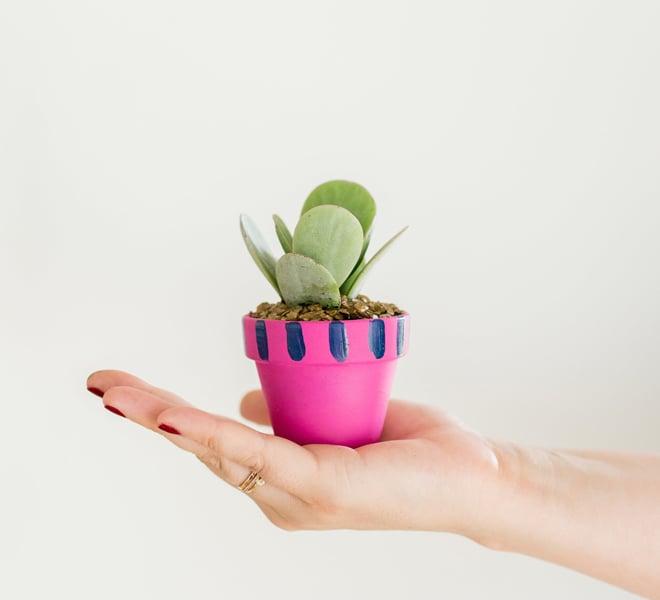 DIY: Mini Painted Pots