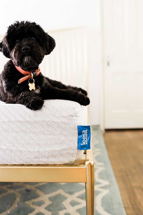Even our LaurenConrad.com pup approves this mattress!