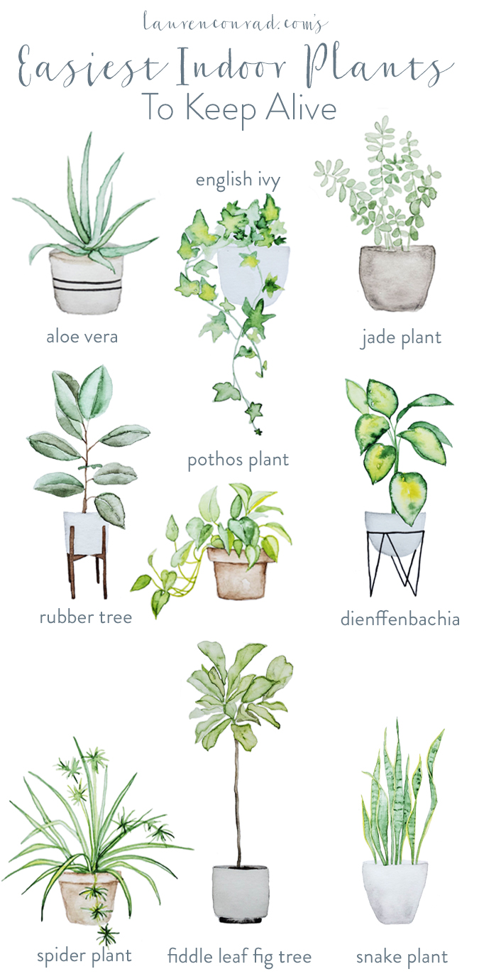 Green thumb the easiest houseplants to keep alive for Easy to keep garden plants