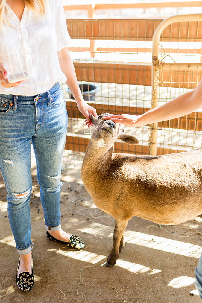 see the animals Team LC got to meet at Farm Sanctuary