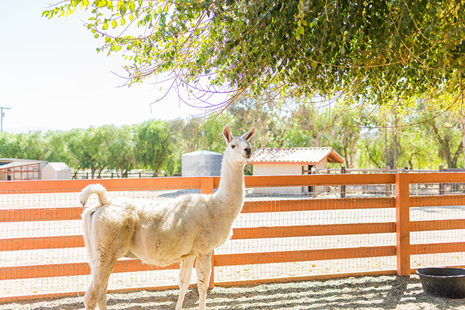 see more of Team LC's visit to Farm Sanctuary