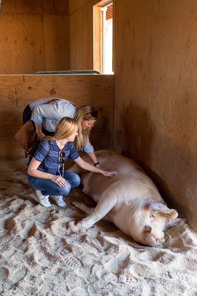 see the animals Team LC met at Farm Sanctuary