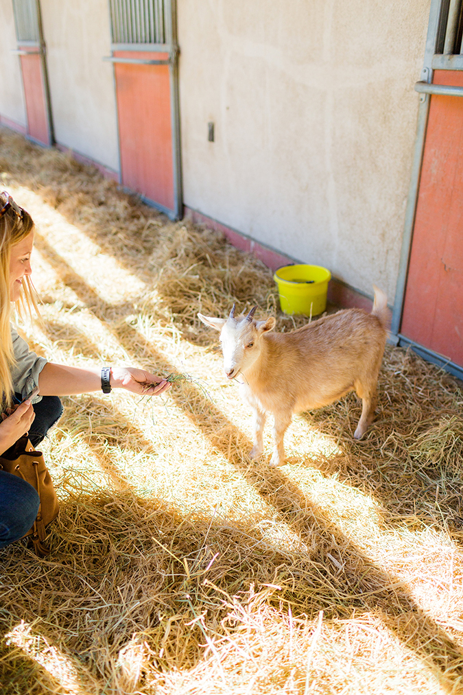 Learn more about the rescued animals at Farm Sanctuary