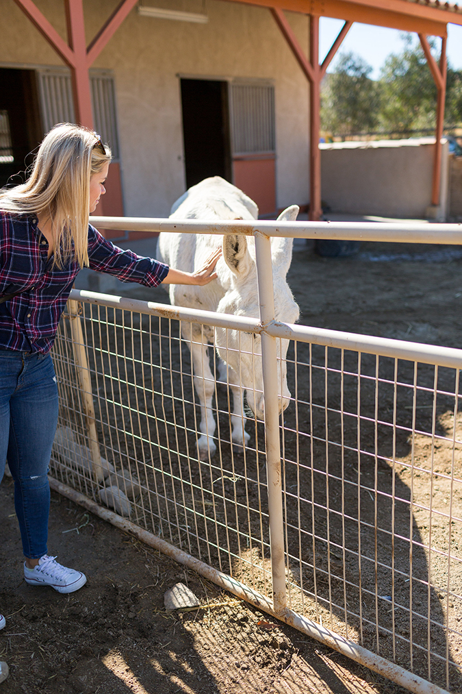 See photos from Team LC's visit to Farm Sanctuary
