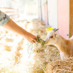 Photo Diary: Our Day at Farm Sanctuary