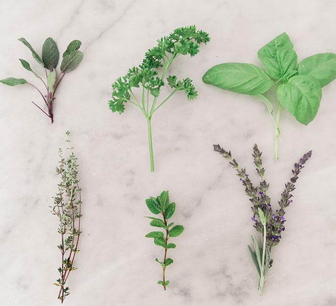 Green Thumb: How to Start an Herb Garden