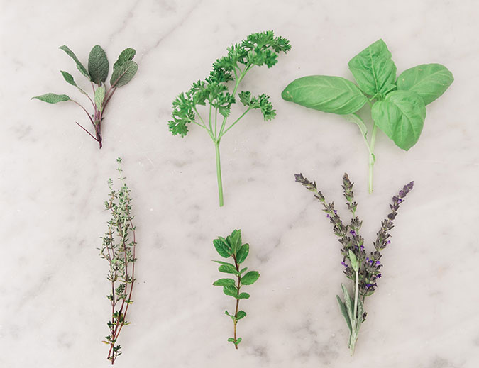 Lauren's tips on how to start your own herb garden at home