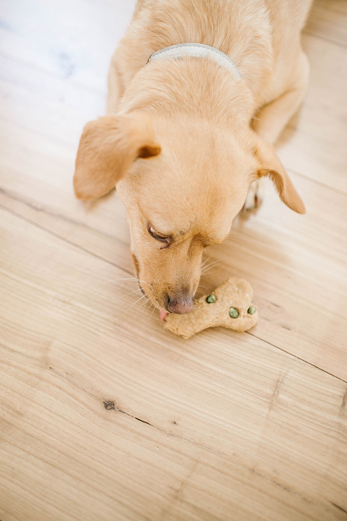 Homemade dog treat recipe via LaurenConrad.com