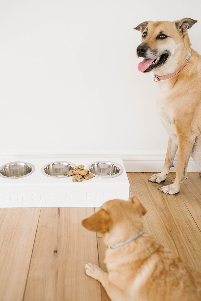 Homemade dog treat recipe on LaurenConrad.com