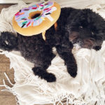Tuesday Ten: The Best Pet Costumes