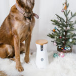 Gift Guide: For Your Dog