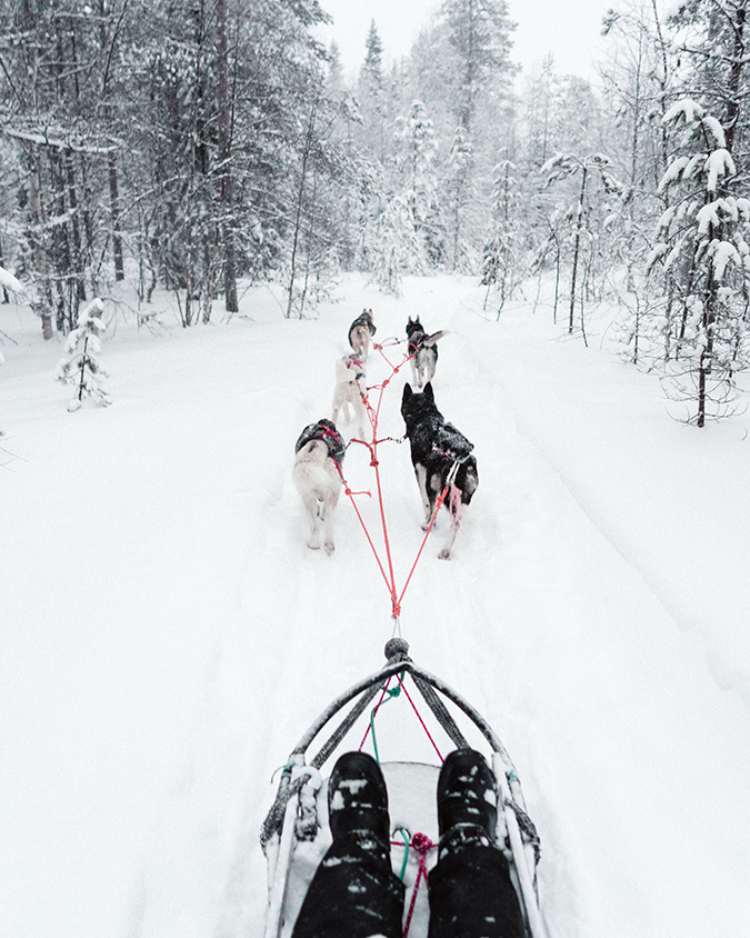 dog sledding in Finland