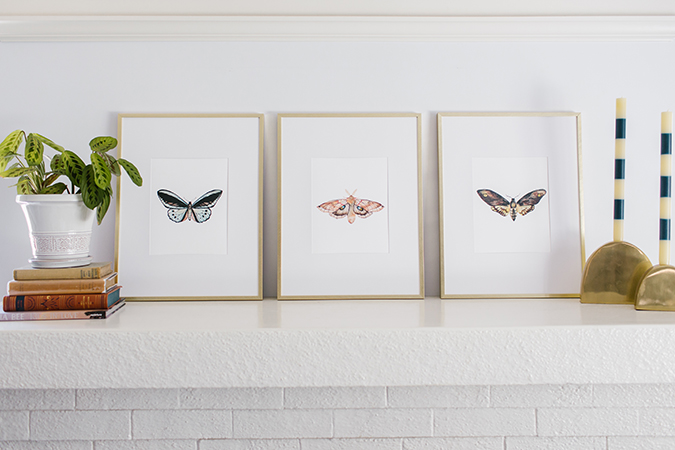 butterfly prints by Alexzandra Marie Art