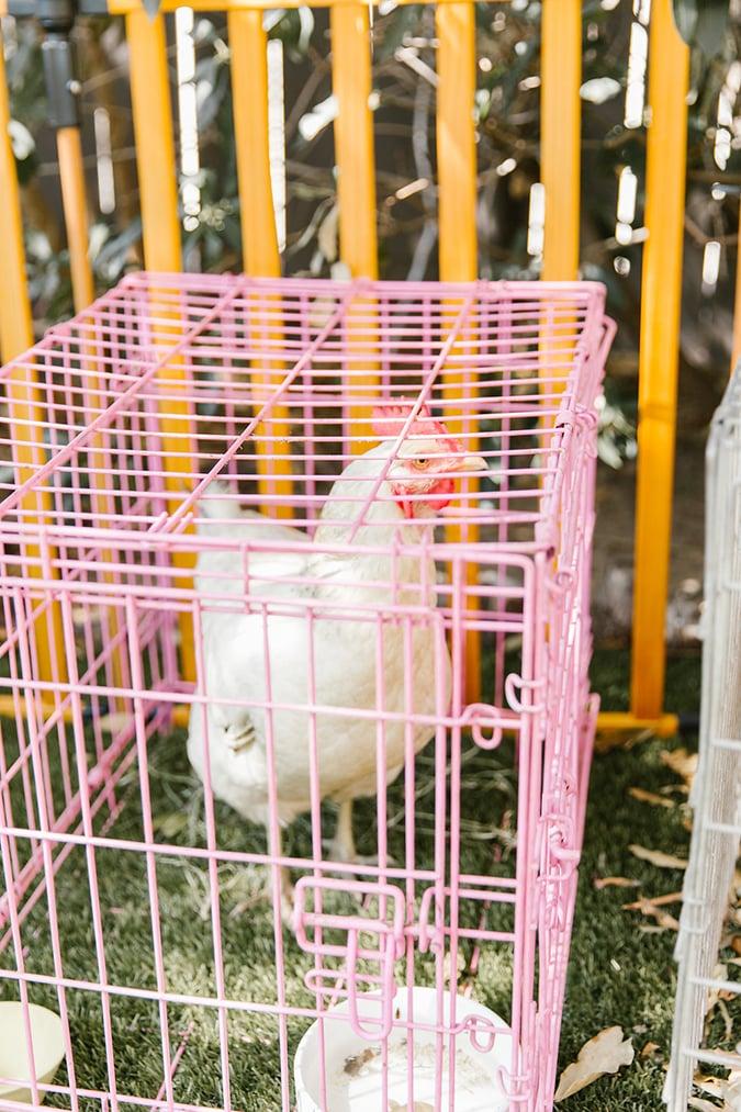 chicken themed birthday party via laurenconrad.com