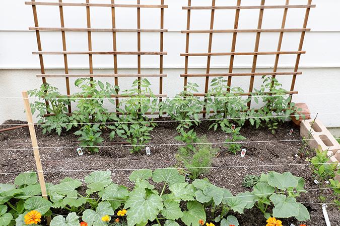 My Tips for Starting an Edible Garden