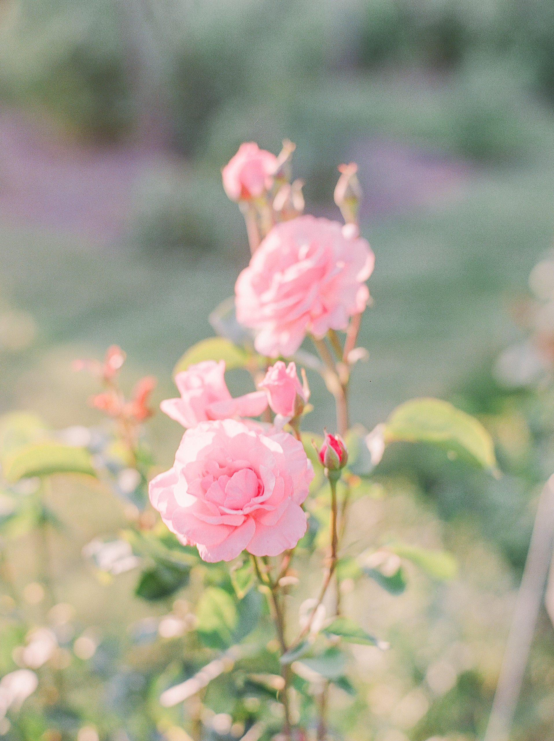 Garden To Vase: The Best Tips For Harvesting, Foraging & Designing Floral Arrangements