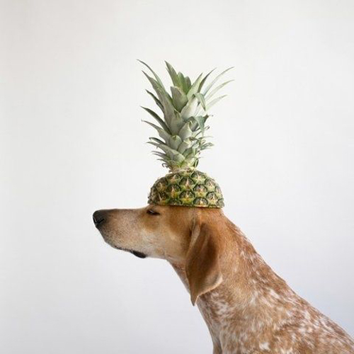 pineapple pup