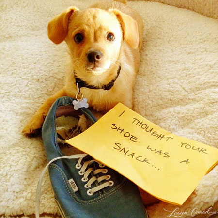 my take on dog shaming