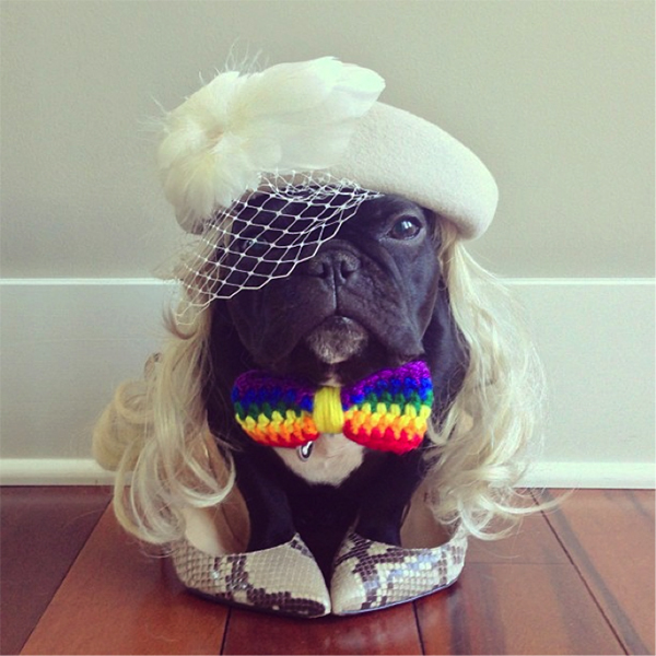 cute dressed up dog